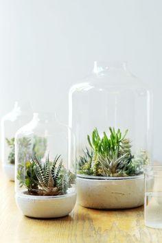 Sukkulenten Dekoration Ideen Flasche