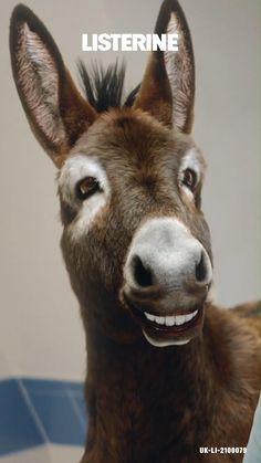 Cute Wild Animals, Baby Animals, Funny Animals, Listerine, Cute Animal Photos, Teeth Care, Animal Jokes, Christmas Scenes, Best Friend Gifts