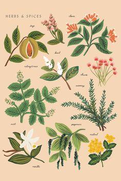 HERBS AND SPICES - RIFLE PAPER - Mokkasin
