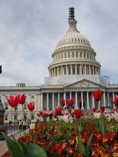 Capitol Hill - Washington DC
