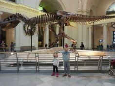 Meet a Dinosaur named Sue at the Field Museum in Chicago!