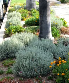 Waterwise Mediterranean - Mediterranean - Landscape - los angeles - by Urban Oasis Sidewalk Landscaping, Shrubs For Landscaping, Water Wise Landscaping, Landscaping With Rocks, Dry Garden, Side Garden, Verge, Drought Tolerant Landscape, Garden Planning