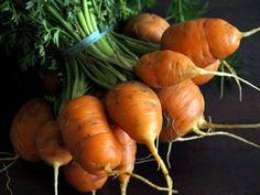 botte de carottes boule (grelots)