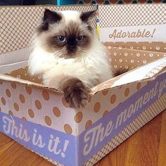 ModCloth boxes, a cat's best friend.