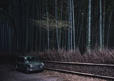 """""""Classic Mini in the Bamboo Grove"""" 