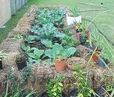 Straw bale garden, what a great idea!