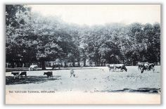 The Vineyard Paddock, Newlands - 1904 Nordic Walking, Most Beautiful Cities, Cape Town, Old Photos, South Africa, Past, Street View, Explore, History