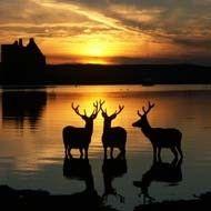 http://www.mysteriousbritain.co.uk/scotland/arran/folklore/lochranza.html
