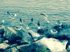 포항 호미곶 근처 바닷가