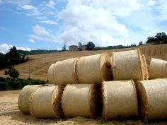 Bolognashire: campi di grano