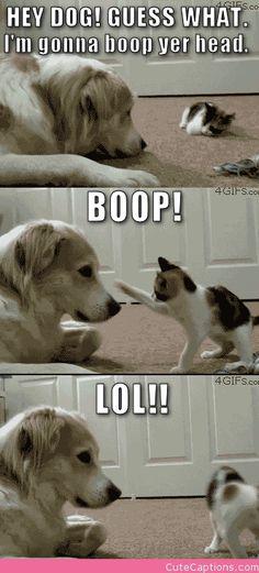 Hey Dog!   Cute Captions