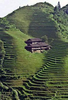 Eastern terraces.