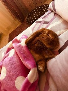 i just wanna lay beside this bunny