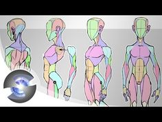 Sycra's Simplified Anatomy Model - YouTube