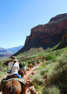 Grand Canyon South Rim Mule Trips