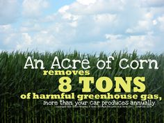 An acre of #corn removes 8 tons of harmful greenhouse gas...whether it is GMO or not..take that liberals! ;)
