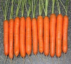 Carrots are now come in all shapes and sizes traditional long, tapered ones; short stubby ones; tiny fingerlike ones; even little round ones. Summer House Garden, Garden Mum, Growing Carrots, Cooked Carrots, Fruit And Veg, Fruits And Vegetables, Sweet Carrot, Plantation, Farm Gardens