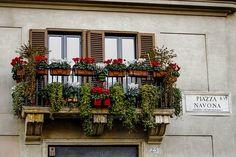 Maceta, Flores, Italia