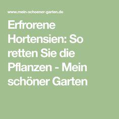 Erfrorene Hortensien: So retten Sie die Pflanzen - Mein schöner Garten