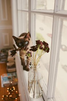 ....3 steps to disaster....OK, putting that vase on the windowsill...they must not have had cats long! 1. That vase isn't going to stay on the sill 2. They're going to be cleaning up where the cat will be bringing back up those flowers...