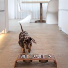 MiaCara dog bowl dogBar walnut
