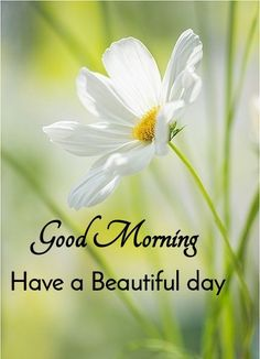 Good Morning Friends Images, Good Morning Wednesday, Good Morning Image Quotes, Good Morning Beautiful Quotes, Latest Good Morning, Good Morning Inspiration, Good Morning Prayer, Good Morning Flowers, Good Morning Messages