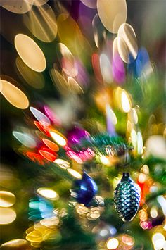 Lensbaby Composer Pro : Sample Image Christmas Magic Photog: Not Listed #Lensbaby #Seeinanewway