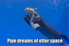 Funny Pipe Dreams of Otter Space Pun