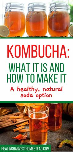 What is Kombucha and How to Make This Delicious Fermented Soda — Home Healing Harvest Homestead Make Your Own Kombucha, How To Brew Kombucha, Kombucha Brewing, Kombucha Fermentation, Fermentation Recipes, Fermented Tea, Fermented Foods, Healthy Juices, Drink