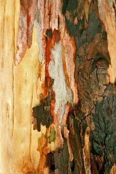 Wood Texture Background, Tree Bark, Nature, Painting, Design, House, Art, Ideas, Art Background