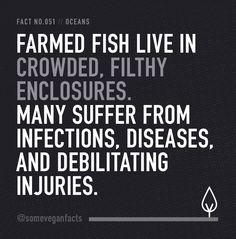 Farmed fish live in crowded, filthy enclosures. Many suffer from infections, diseases, and debilitating injuries. govegan vegan