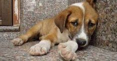 An Animal Abuser Registry! Tennessee is less than two months away from having this country's first statewide animal abuse database. Dog Cruelty, Stop Animal Cruelty, Animals And Pets, Baby Animals, Cute Animals, Dog Love, Puppy Love, Dog Abuse, Animal Pictures