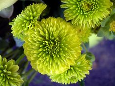 Green Mums | Publish with Glogster!