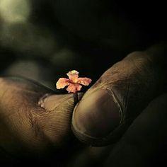 Nós complicamos demais a vida, e por esse motivo sofremos tanto. Deus é simples.  Padre Fábio de Melo