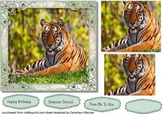Beautiful tiger In the Forest Pyramid  on Craftsuprint designed by Ceredwyn Macrae - A lovely Pyramid card front to make and give to anyone with a Beautiful Tiger in the forest a easy two layer Pyramid has three greeting tags and a blank one for you to choose the sentiment, - Now available for download!