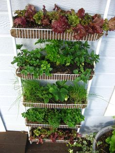 For small space gardening, put your old spice pantry rack to good use! Plant it with lettuces and herbs. Måske en bedre løsning end tagrender, da den kan afmonteres let om vinteren.