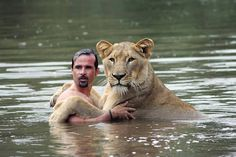 DIVINO DOM - Parece tarefa impossível, mas Kevin Richardson é um autodidata – The Lion Whisperer ('O Encantador de Leões'), como é conhecido, aprendeu a lidar com predadores sozinho. Segundo consta, desde os 3 anos de idade, ele já sentia essa atração por animais selvagens. O zoologista evitou métodos tradicionais para treinar os animais, como jaulas e correntes, e usou outras armas: o amor, a compreensão e a confiança.