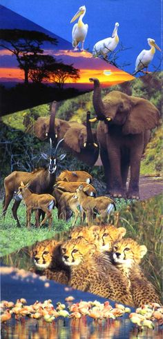 African Safari: It would be so much fun to go on one someday!