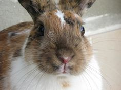 Model bunny can wistfully gaze into the distance or boldly look into the camera - August 7, 2013 - More at the link: http://dailybunny.org/2013/08/07/model-bunny-can-wistfully-gaze-into-the-distance-or-boldly-look-into-the-camera/ !