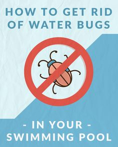 A step-by-step guide to getting rid of two types of water bugs that can infest your swimming pool: water boatmen and backswimmers. Swimming Pool Landscaping, Swimming Pools, Landscaping Ideas, Backyard Pools, Pool Sand, Pool Water, Pool Cleaning Tips, Pool Cleaning Service, Cleaning Hacks
