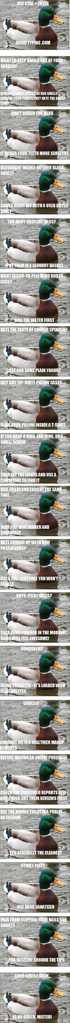 Good advice duck