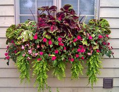 Window Box and Wall Planter Photo Gallery love the coleus in the window box! Window Box und Wall Planter Photo Gallery lieben die Buntlippe in der Window Box! Balcony Flower Box, Window Box Flowers, Flower Boxes, Container Flowers, Container Plants, Container Gardening, Box Container, Succulent Containers, Contemporary Outdoor Decor