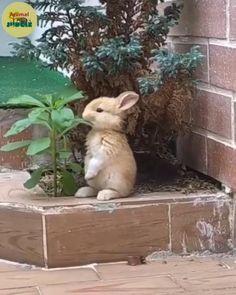 Cute Baby Bunnies, Baby Animals Super Cute, Cute Little Animals, Cute Funny Animals, Baby Animals Pictures, Cute Animal Photos, Nature Animals, Animals And Pets, Pet Bunny Rabbits