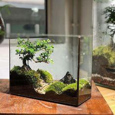 Succulents Diy, Planting Succulents, Planting Flowers, Jade Bonsai, Bonsai Art, Terrarium Plants, Glass Terrarium, Plant In Glass, Plant Bugs