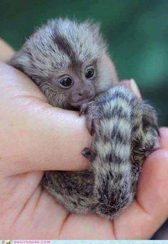 Oh my gosh! So cute!!!
