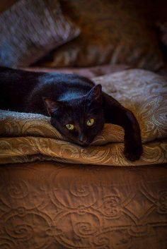 Black cat ... Just waiting.