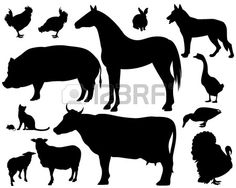 on the farm - set of fine animals silhouettes - black outlines over white