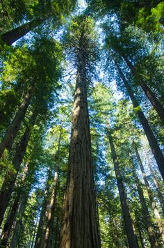 Redwood National Parks