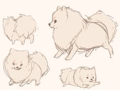 pom studies by pareukia on tumblr