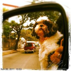 Driving w/ Pepper #philippines